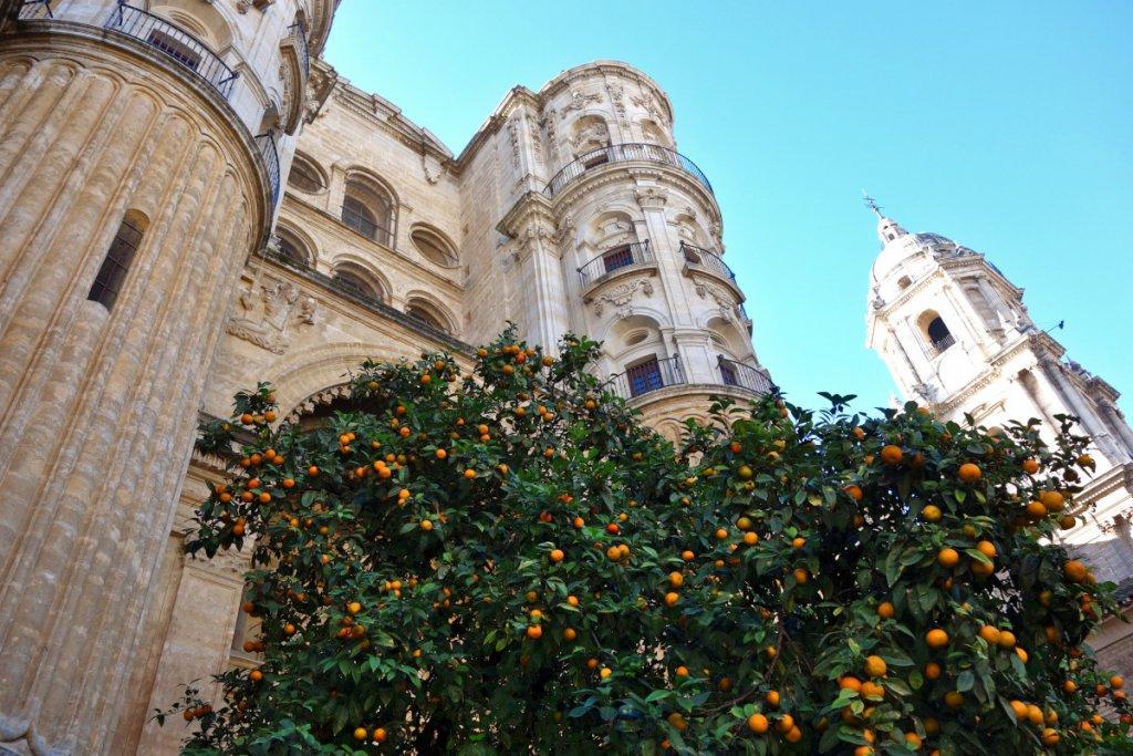 Malaga Kathedrale und Orangen