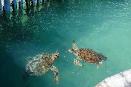 Mexiko Schildkröten