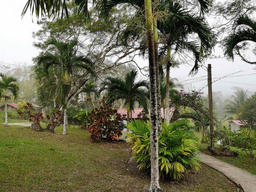 Belize San Ignacio Regen