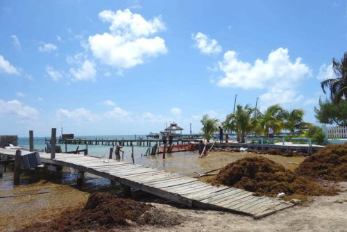 Caye Caulker Strand Seegras