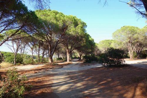 Sardinien Strand Orosei Parken
