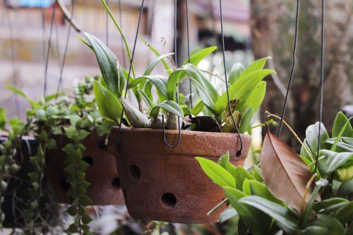 Souvenir Pflanzen