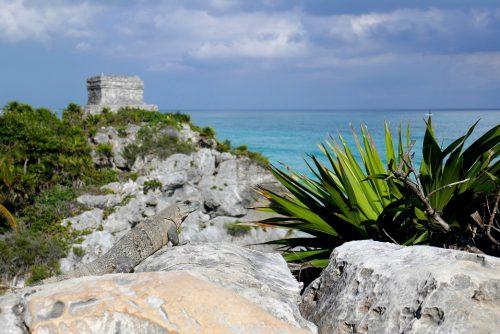 Eidechse Maya Ruinen