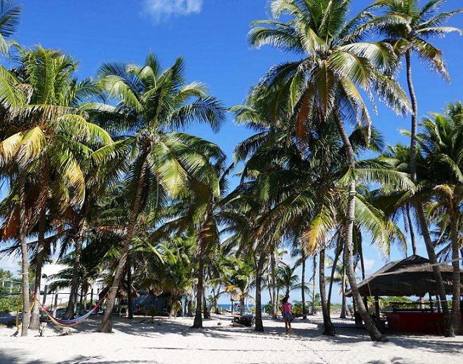 Isla Mujeres Palmen