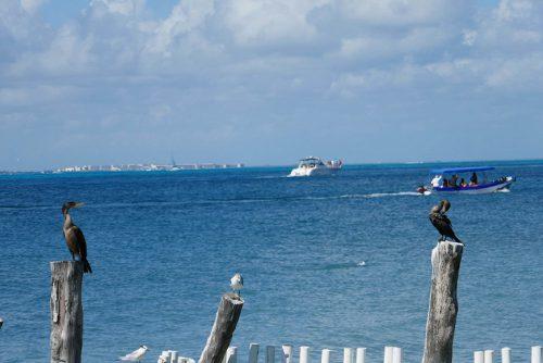 Isla Mujeres Kormoran