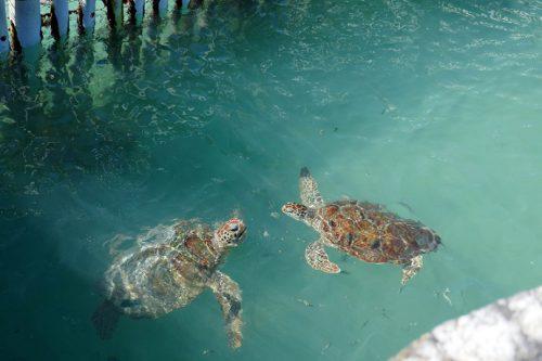 Isla Mujeres Tortugranja