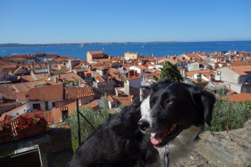 Piran mit Hund