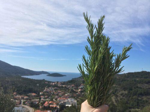 Rosmarin Kroatien